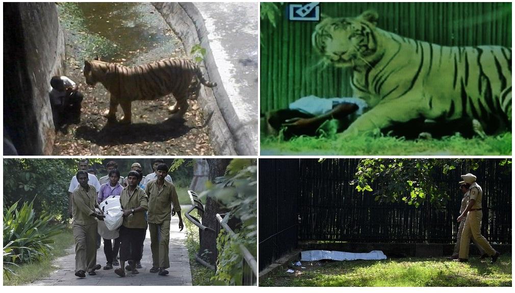 102_2338-blog-tiger-zoo