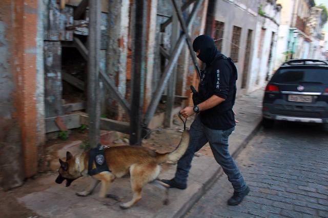 Cão farejador Vinny em ação durante operação policial da Senarc: animal fará demonstração na Exposegma